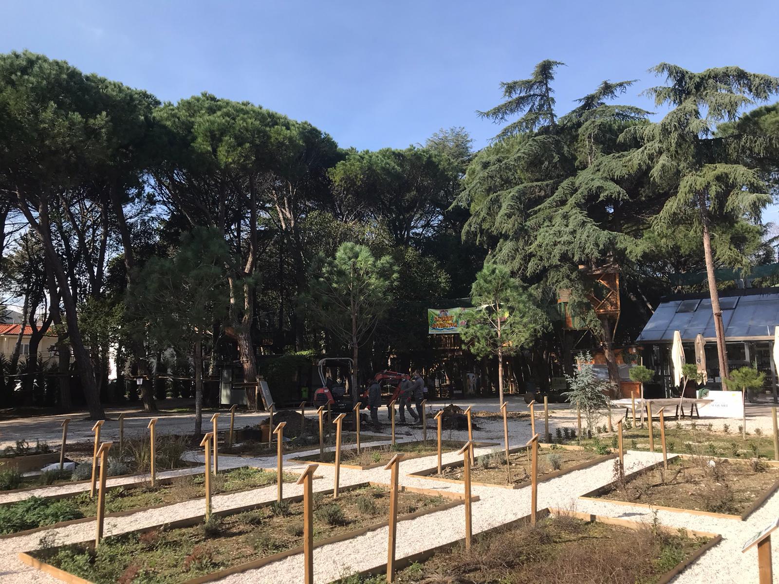 Nuovi alberi al parco Cicchetti