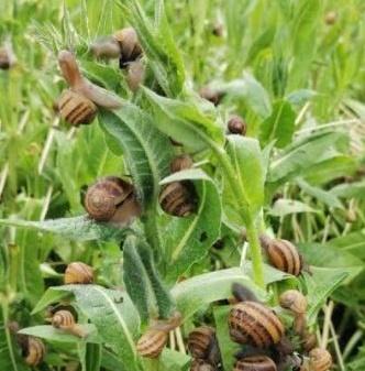 Immagine allevamento lumache a Riccione